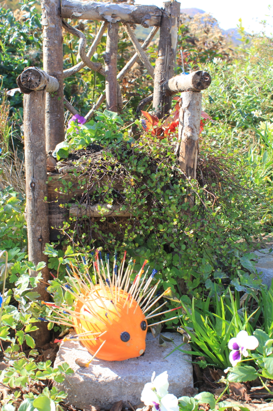 Pumpkins 8 Porcupine