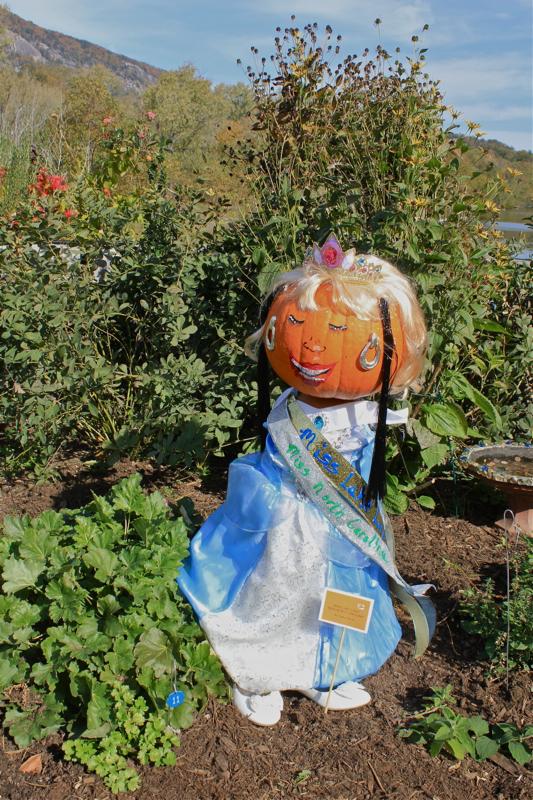 Pumpkins 9 Miss NC