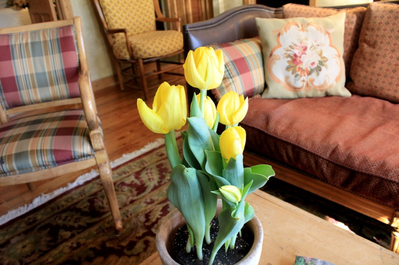 LL Living Room with tulips 2