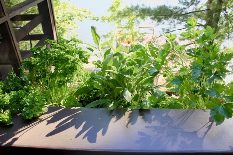 LL Balconey Herbs 2